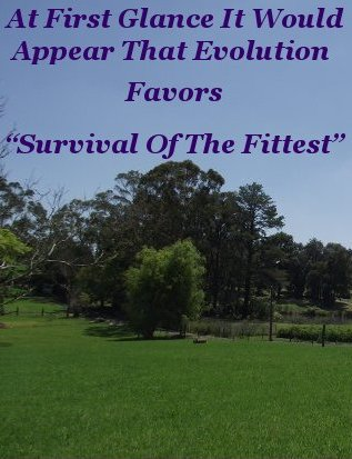 """At first glance it would appear that evolution favors """"survival of the fittest"""""""