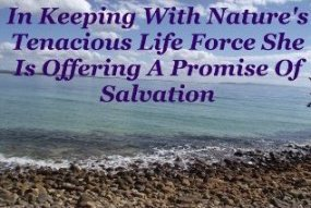 In keeping with Nature's tenacious life force She is offering a promise of salvation