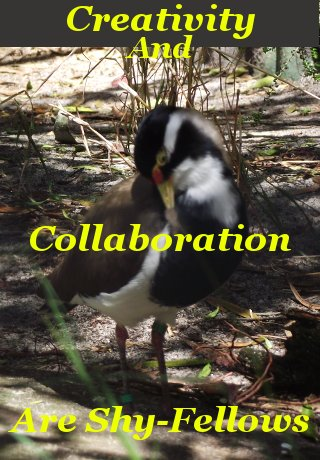 Creativity and collaboration are shy-fellows