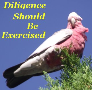 Diligence should be exercised