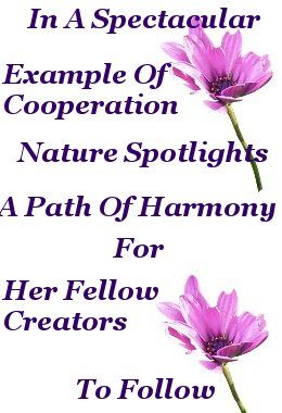 In a spectacular example of cooperation nature spotlights a path of harmony for her fellow creators to follow