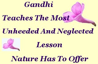 Gandhi teaches the most unheeded and neglected lesson nature has to offer