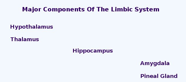 Major Components Of The Limbic System