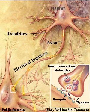 Human Brain - Synaptic Connection