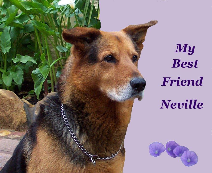 Neville Dog