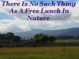 There Is No Such Thing As A Free Lunch In Nature