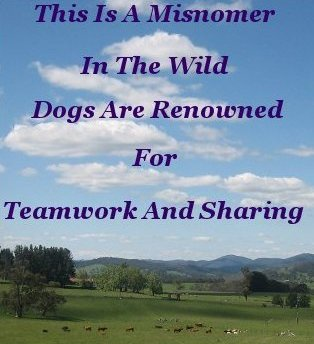This is a misnomer in the wild dogs are renowned for teamwork and sharing
